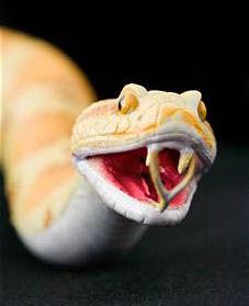 orange snake.jpg