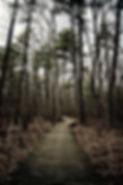 dark swamp.jpg