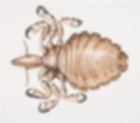 parasite4a.jpg