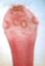 parasite3.jpg