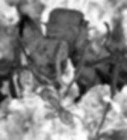 ant queen1.jpg