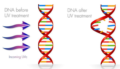 DNA B&A.JPG