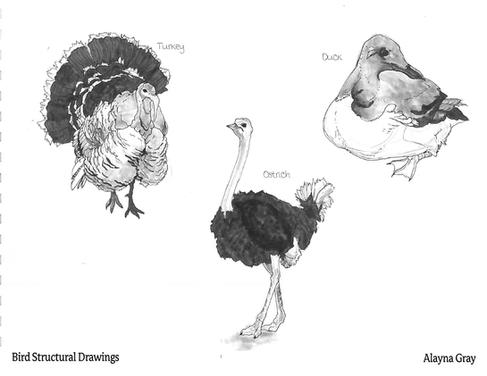 Bird Strucutral Drawings.png