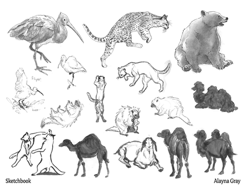 Field Sketchbook.png