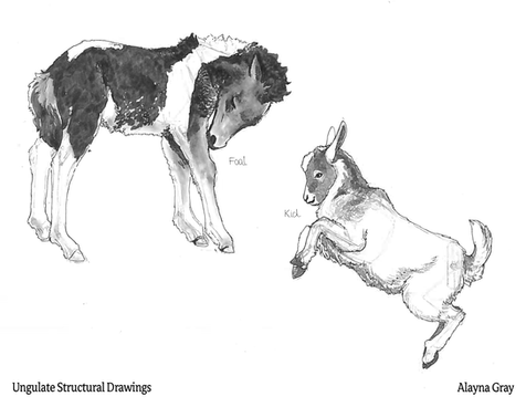 Ungulate Structural Drawings.png