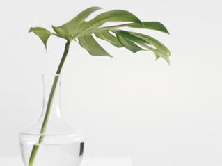 Como tornar sua casa mais feliz usando plantas