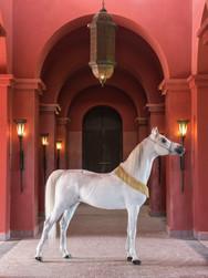 ARABIAN HORSE Le Selman Marrakech