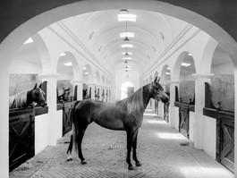 Argentina, Zichy Estate, stables