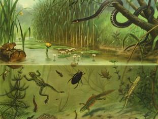 [Breincolumn] Achteruitgang biodiversiteit is onzichtbaar voor onze hersenen