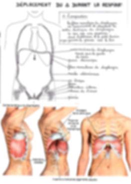 diaphragme.jpg