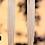 Thumbnail: Long Tassel Drop Earrings