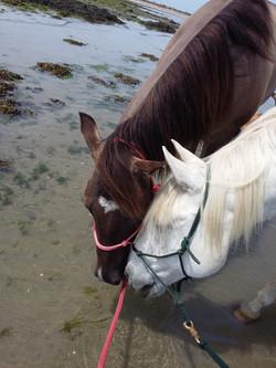 Spirit et Piropo à la plage