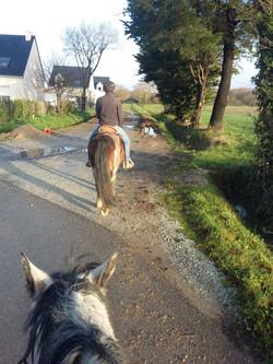 1ere sortie d'un cheval au débourrage