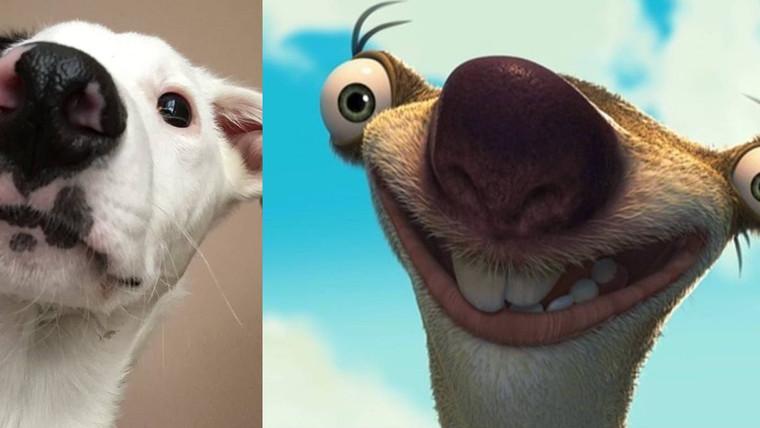 Spot = Sid?