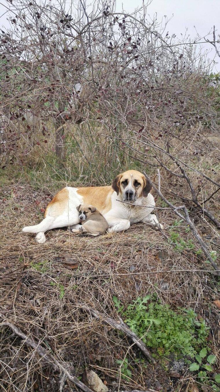 Onze knappe Leona met een van haar (pleeg)pups!