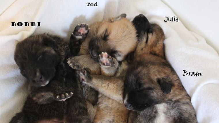 Update: nog meer puppy's
