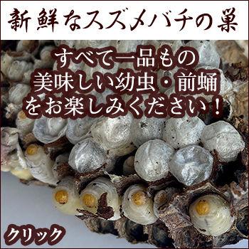 スズメバチの巣02-2.jpg