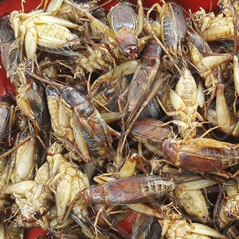 冷凍 大コオロギ(Giant Cricket)100g