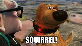 Stay Focused..... Squirrel....