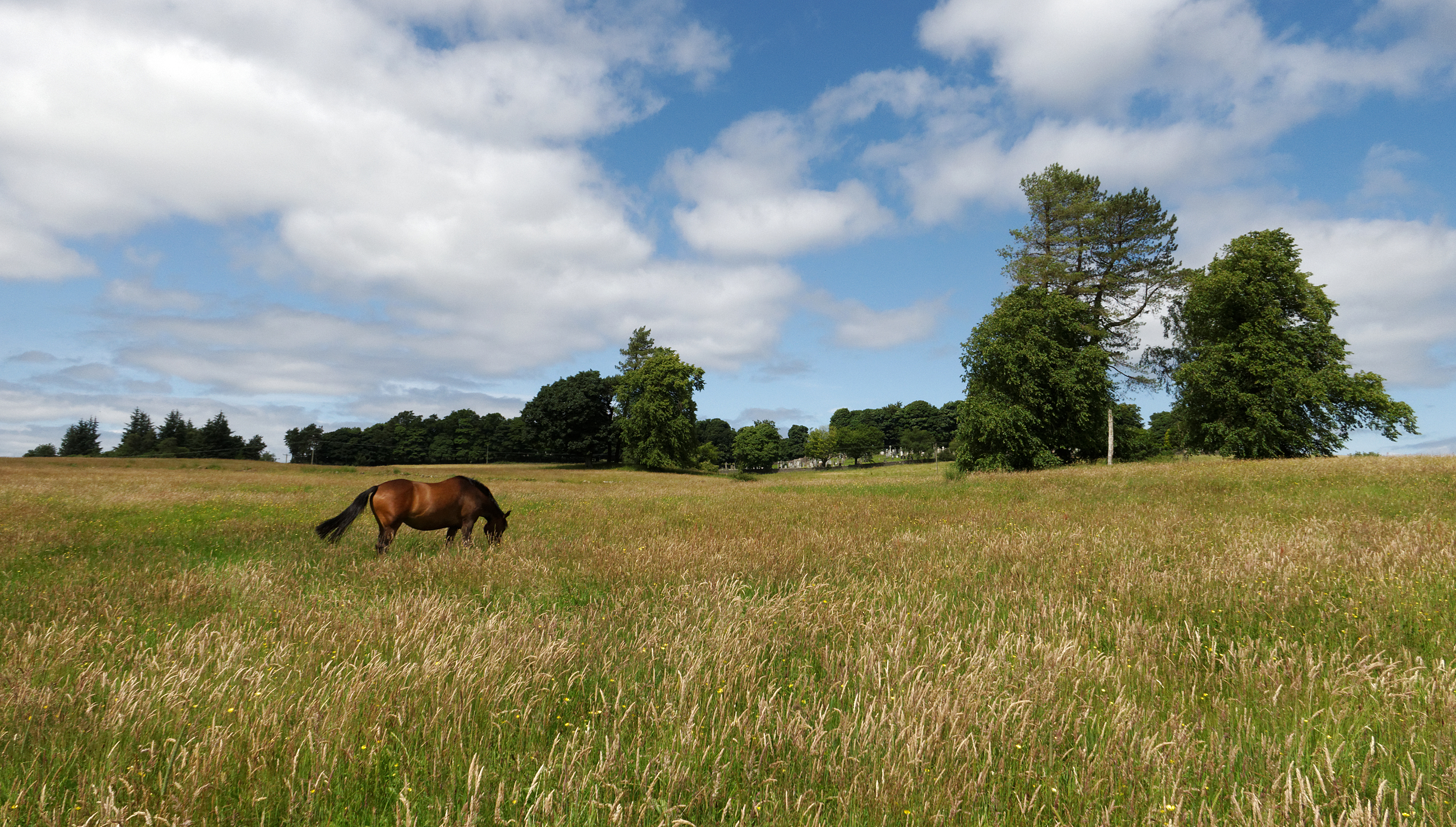 beautiful_kilmacolm_meadow1