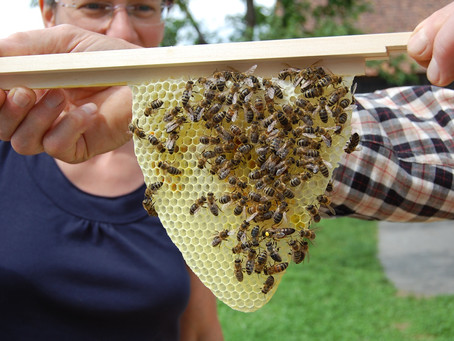 Bienen live erleben