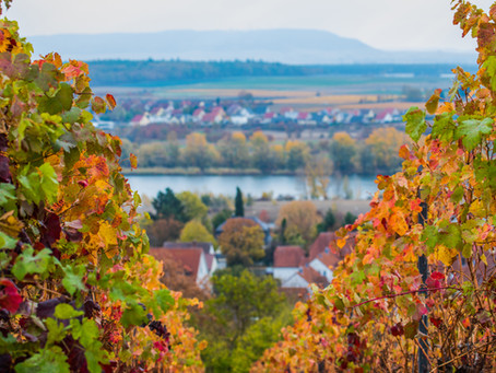 """""""Wild & Wein"""": Exkursion in die Kulturlandschaft Weinberg - mit Verkostung"""