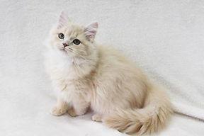model_cat33 (1).jpg