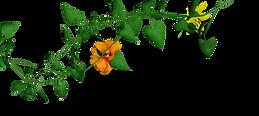 leavesD.png