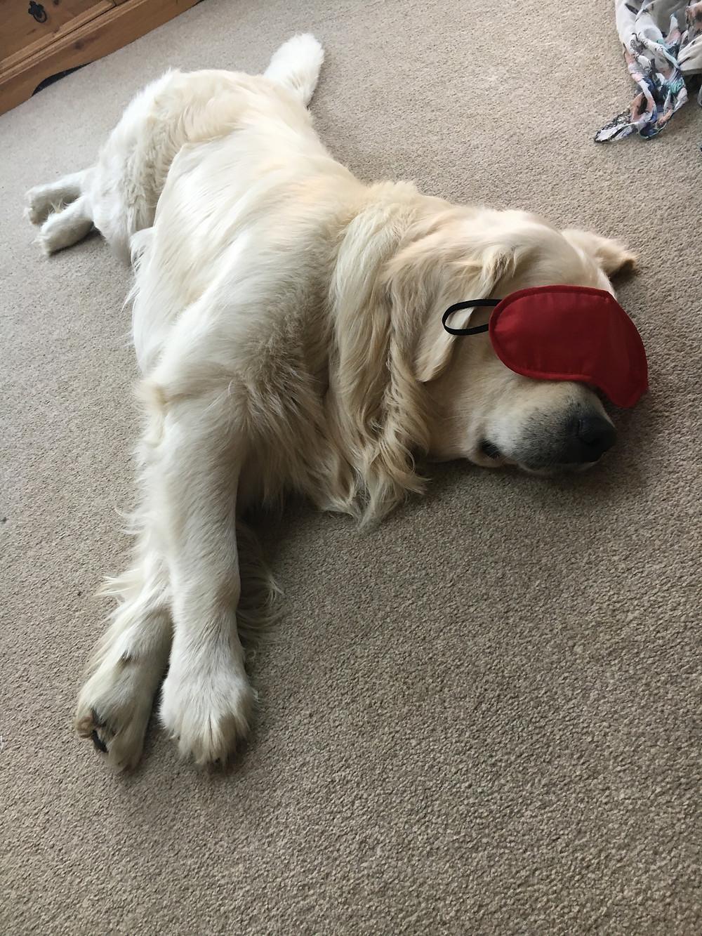 Bentley dog relaxing