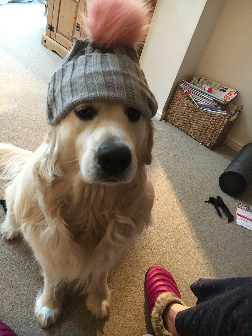 Dog with bobble hat