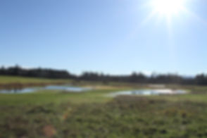 Swamp Dog Farm Nov 15 011.JPG