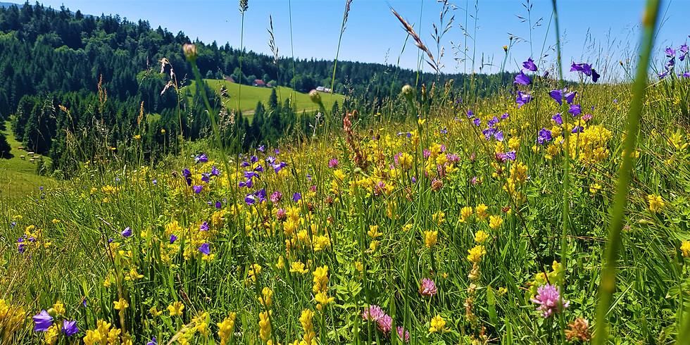 12 Jun. - Balade Botanique - Bugey; Grand Colombier