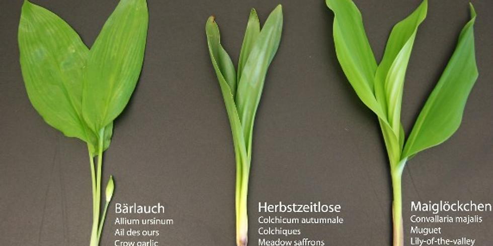 Pickers and Gatherers - Wild Garlic and Birch Sap