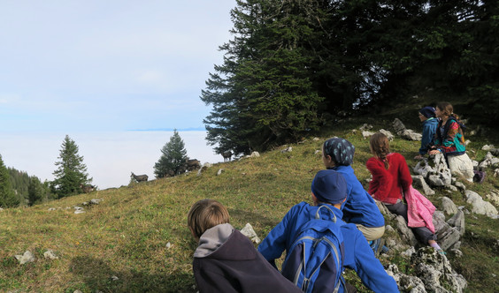 Camp Jeunesse, Nature et Vie Sauvage Jura - oct.19 Photo: Julien Temple