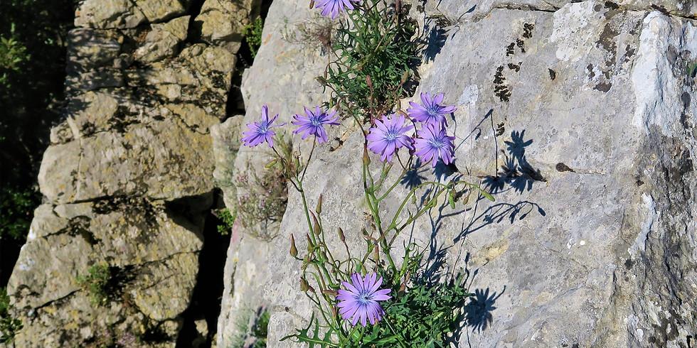 8-10 May / Plantes Sauvages Méditerranéennes / Mediterranean Wild Plants