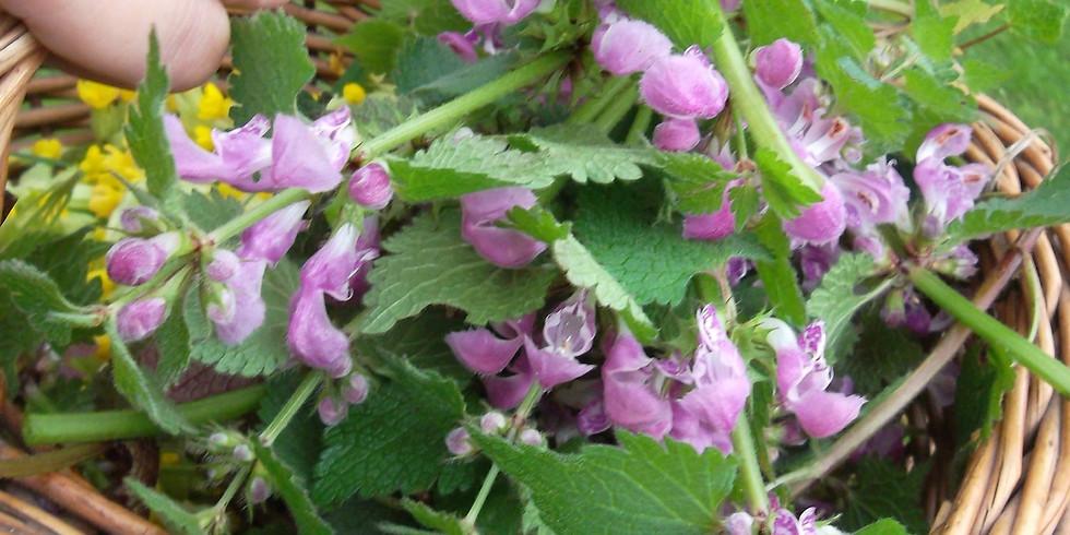 6 Apr. / Plantes Sauvages Comestibles de Saison / Edibleand Medicinal Plants
