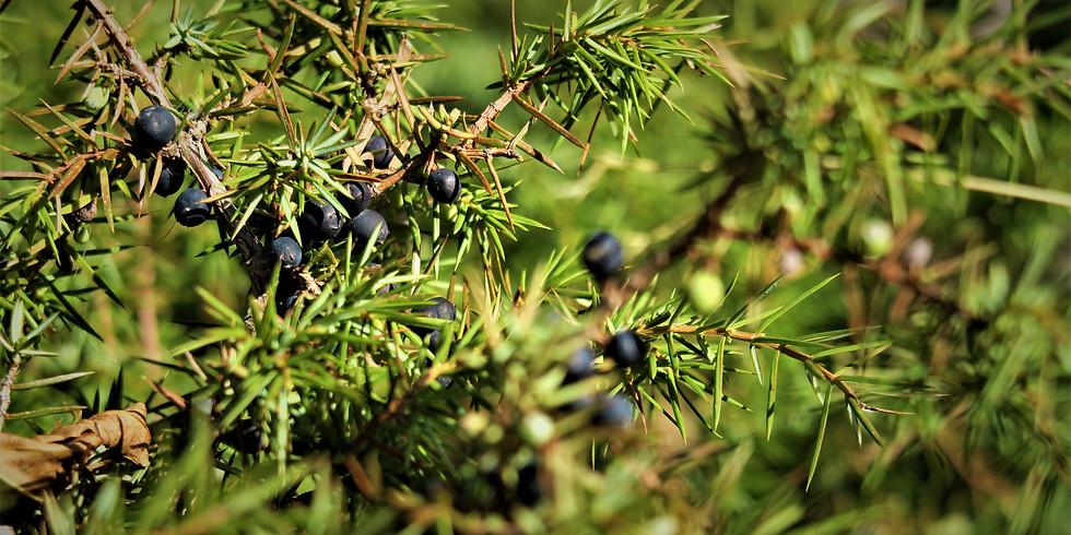 03 Oct. / Plantes et Fruits Sauvages - Cueillette d'Automne / Wild Plants - Autumn Picking
