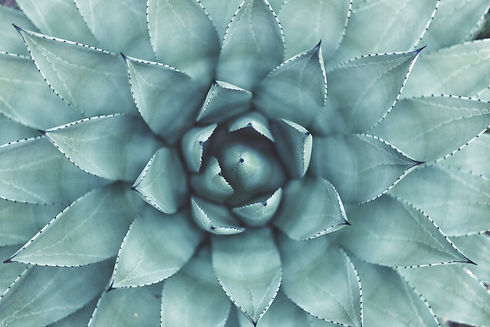Succulent_edited.jpg