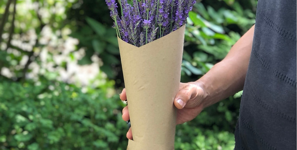 Freshly cut bunch of tall phenomenal lavender pick up only