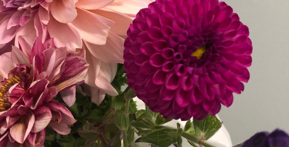 Hollyhill violetta