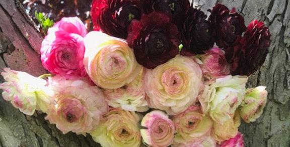 Ranunculus :Bianco Sfumato *10