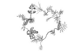 Branches recherche