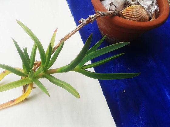 la plante.jpg