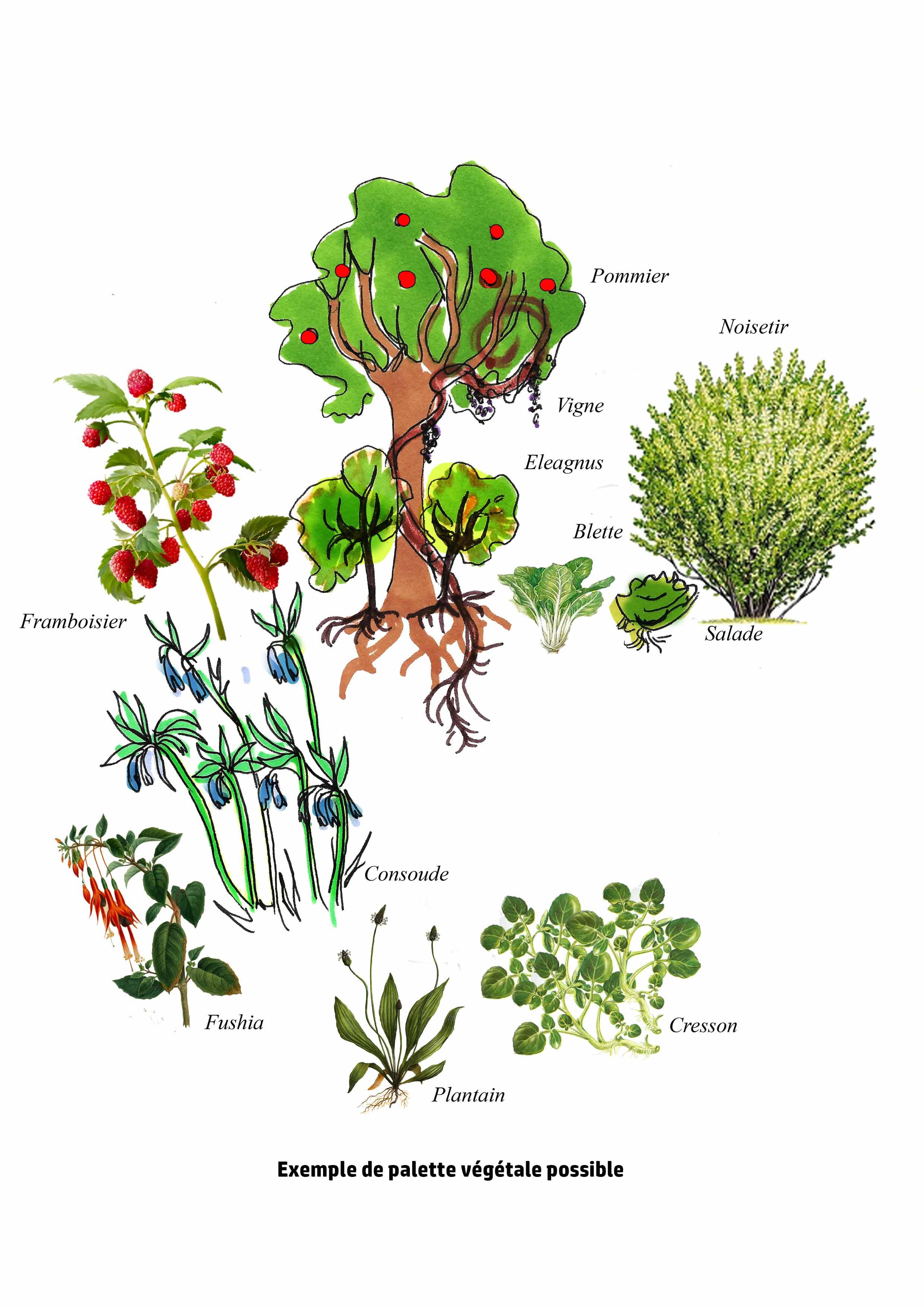 Un jardin comestible