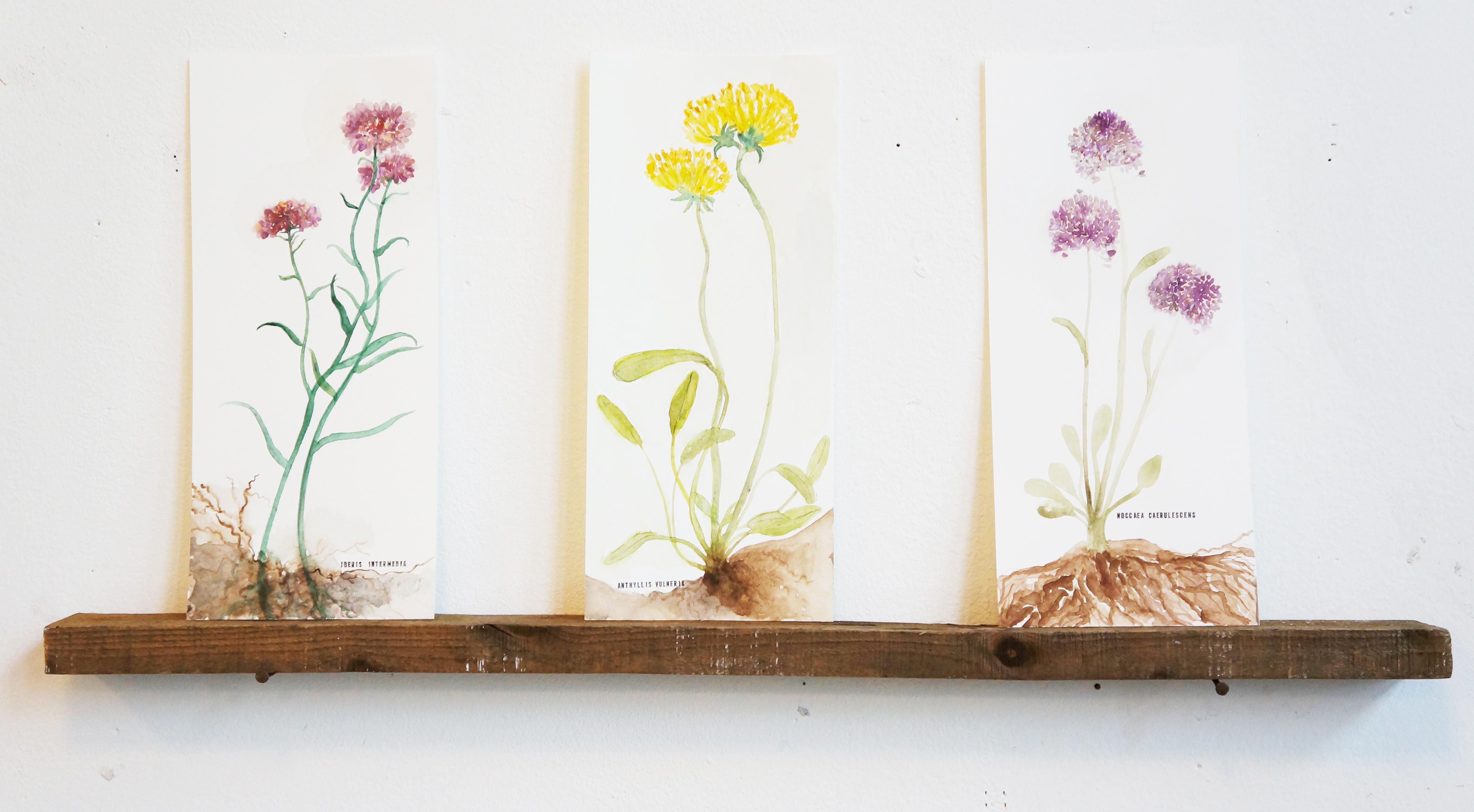 Plantes dépolluantes (série)