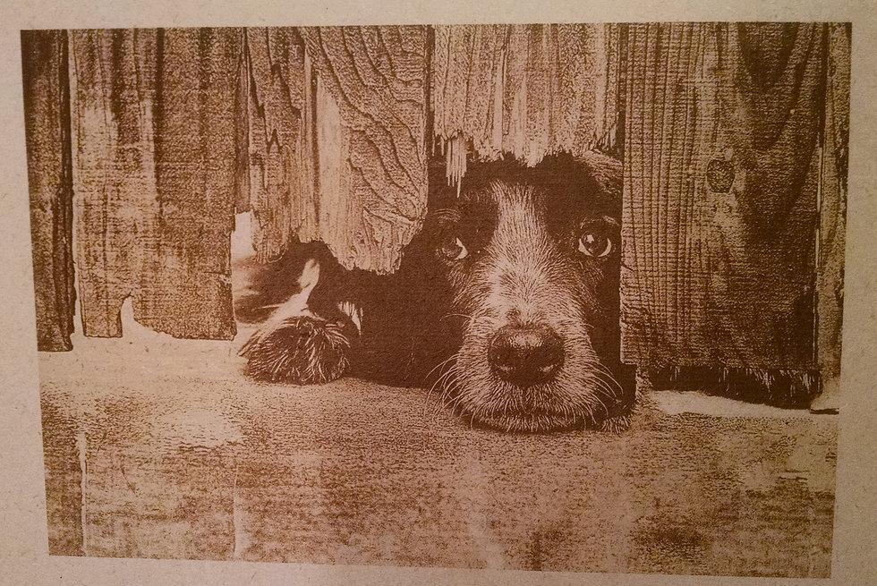 DogEngraving.jpg