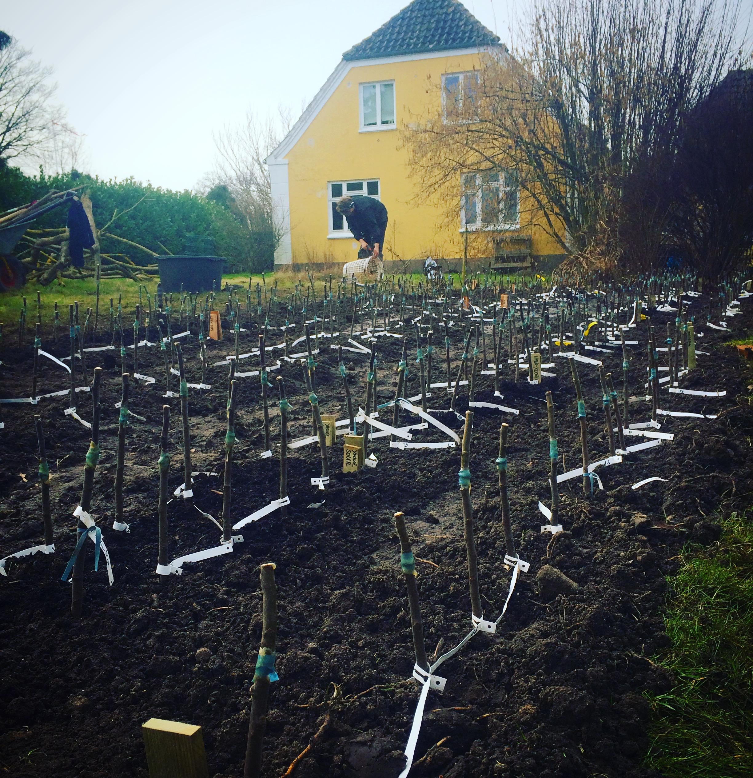 Planteskole i haven