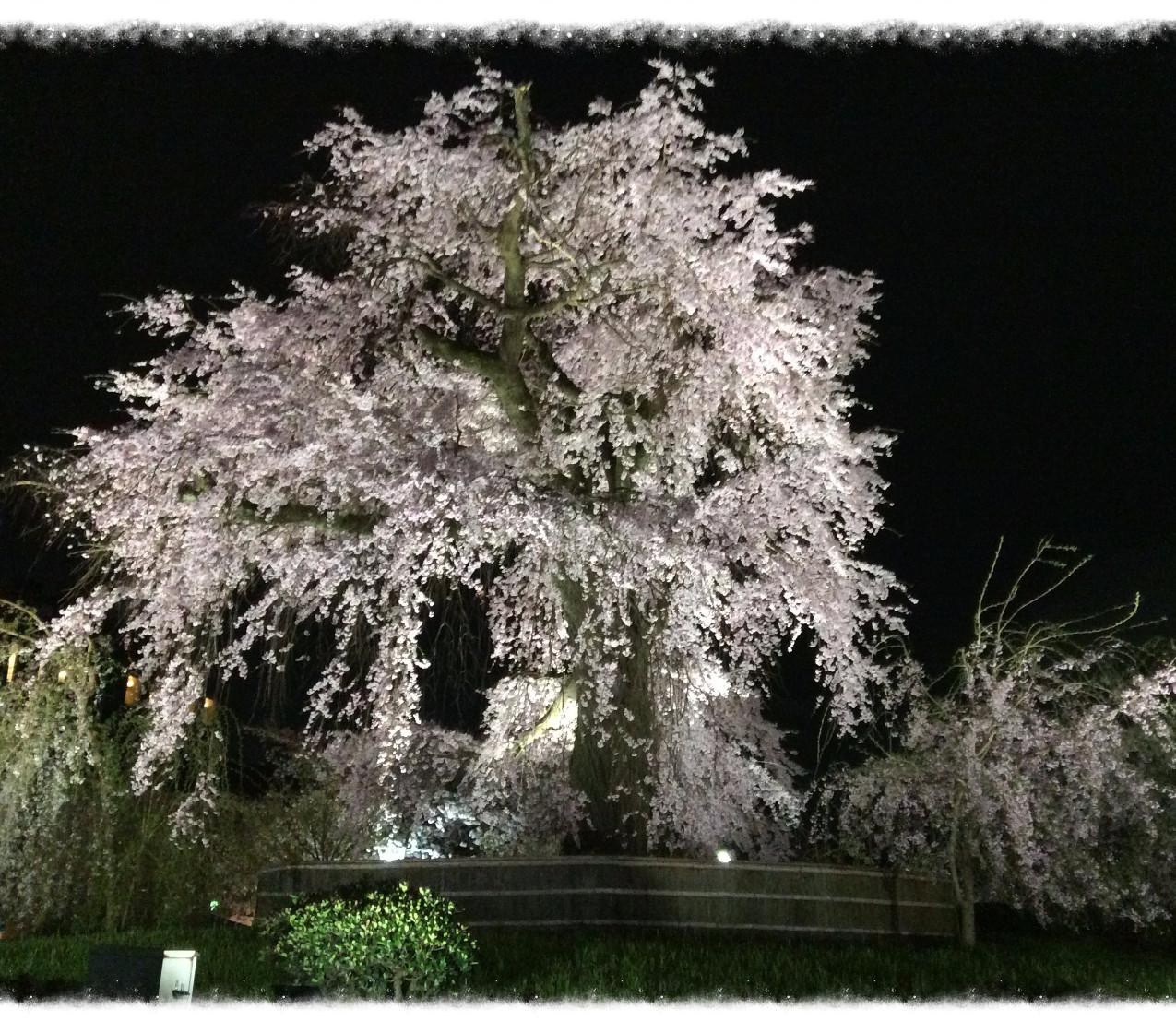 Yasaka Temple @Kyoto
