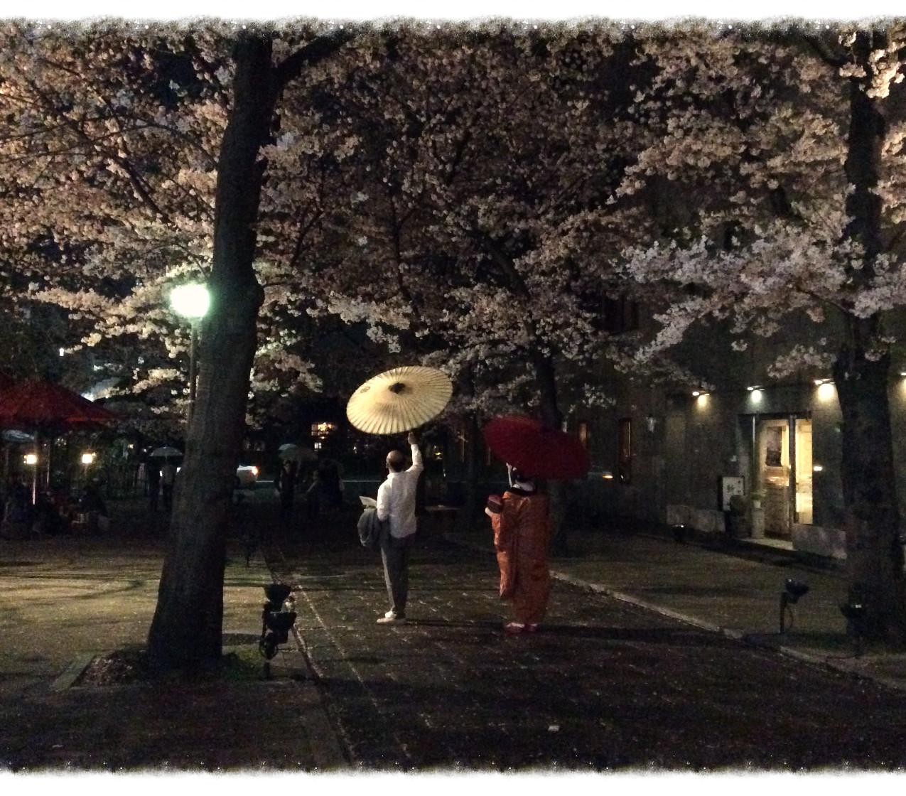 Maiko-san and Sakura @Kyoto