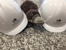 Petey the Platypus PCIF mascot